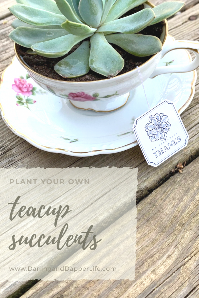 """Teacup succulent with, """"plant your own teacup succulents"""" title and a tea tag that reads, """"thanks""""."""