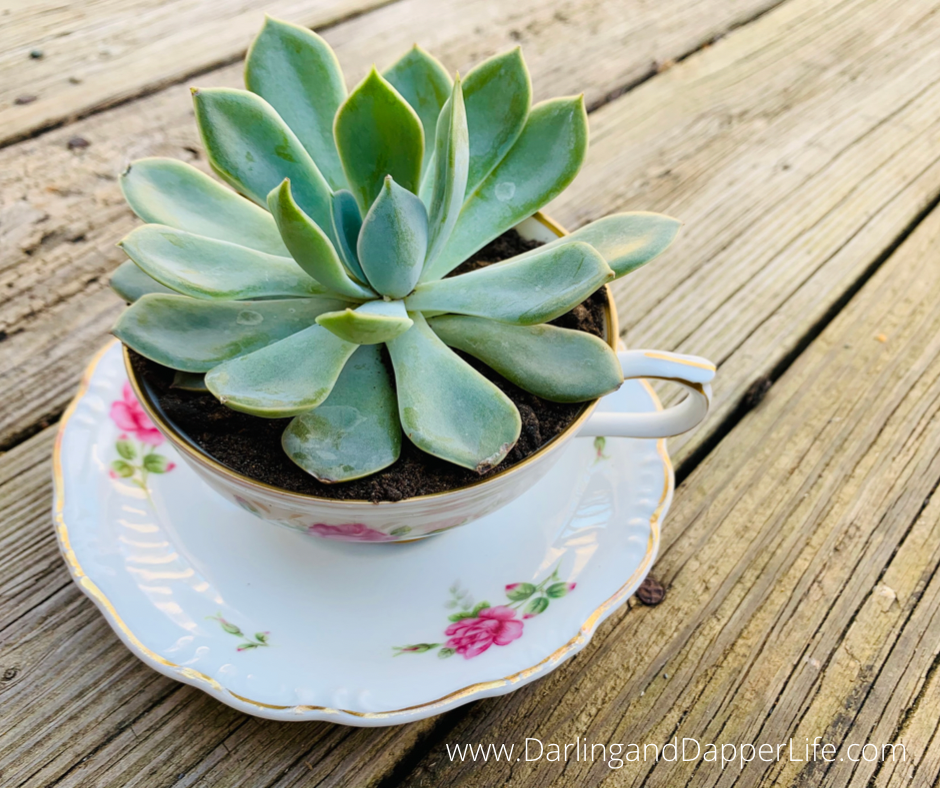 """Close up view of green succulent planted in a teacup with a tea tag that reads, """" thanks""""."""
